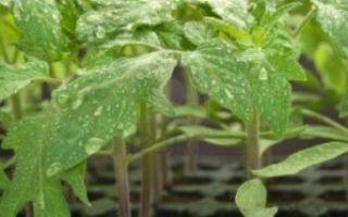 Какие бывают дикорастущие растения?