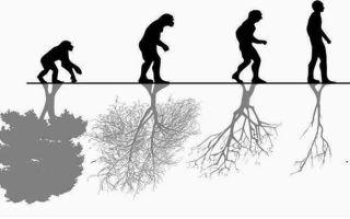 Какое влияние человека на природу?