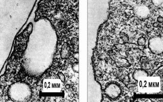 Какие функции плазматической мембраны?