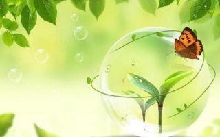 Что является рациональным природопользованием?