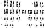 Какие бывают хромосомные болезни?