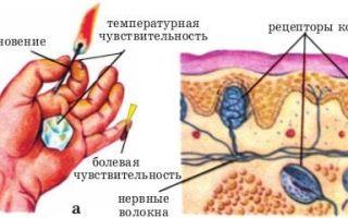Какое значение органов чувств человека?