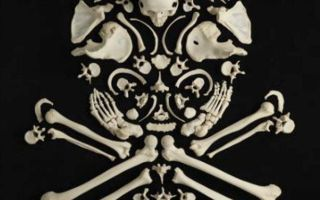 Как узнать, сколько костей у взрослого?