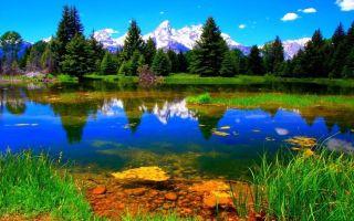 Что относится к живой и неживой природе?