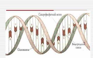 Что входит в состав нуклеотида?