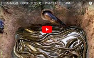 Значение омонимов в русском языке