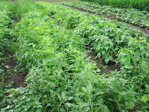 Дикорастущие растения: виды, строение и защита, вредители