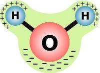 Какую роль выполняет вода в жизнедеятельности клетки: какую роль играет фотолиз воды, свойства воды