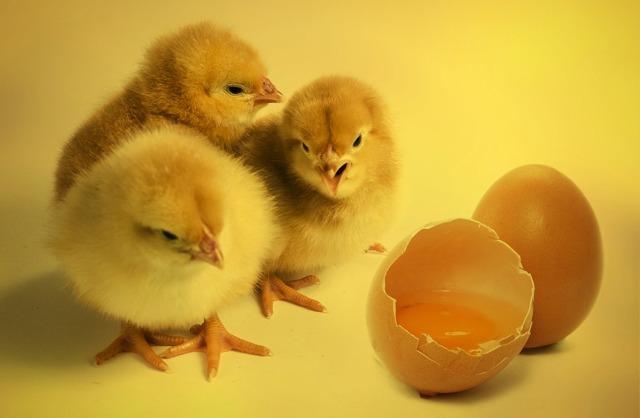 Что значит пословица «цыплят по осени считают», значение и употребление, аналоги в других языках