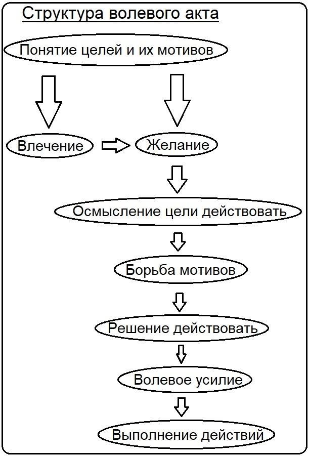 Определение понятия воли в психологии и его основные характеристики, свойства и структура, виды воли