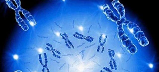 Сколько хромосом у нормального человека: общие сведения о хромосомах, генные проблемы и нарушения