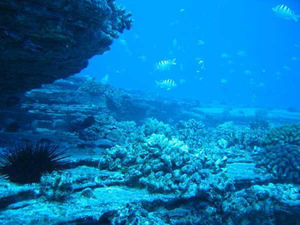Самое глубокое дно мирового океана: где находится, особенности флоры и фауны