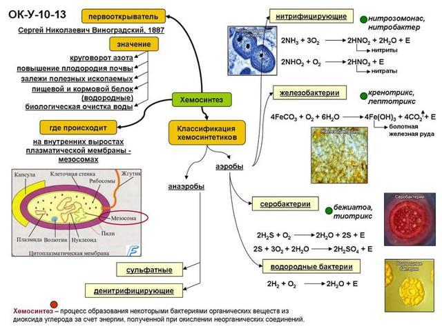 Описание процессов пластического и энергетического обмена в клетке: этапы, различия и примеры