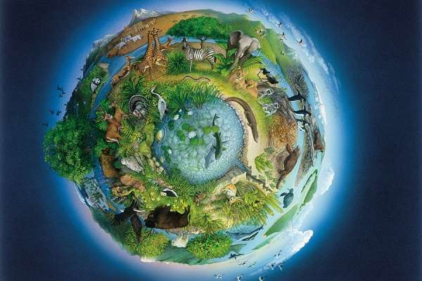 Определение неживой природы: какие объекты к ней относятся, их признаки, особенности и классификация